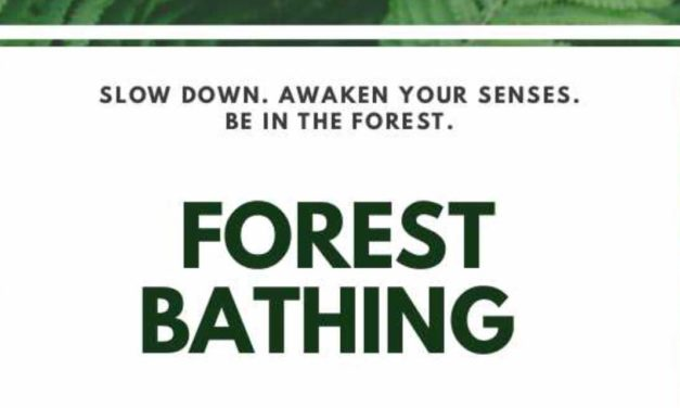 Awaken your senses with 'Forest Bathing' walks on Oct. 26, 30 & Nov. 16