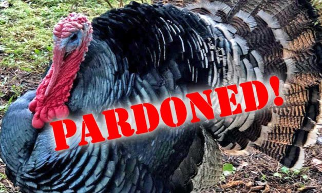 UPDATE: Whew – 'Dinner or Pardon' Turkeys will be pardoned Tuesday afternoon!