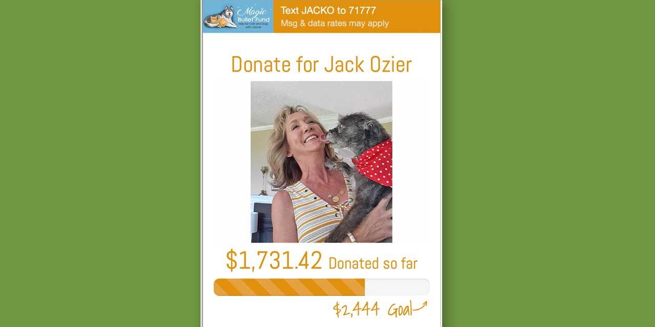 Normandy Park pet 'Jack Ozier' fighting cancer with help from online fundraiser