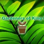 You can now 'Ask a Master Gardener' Live, Online or by Email